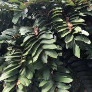 cardboard palm- -